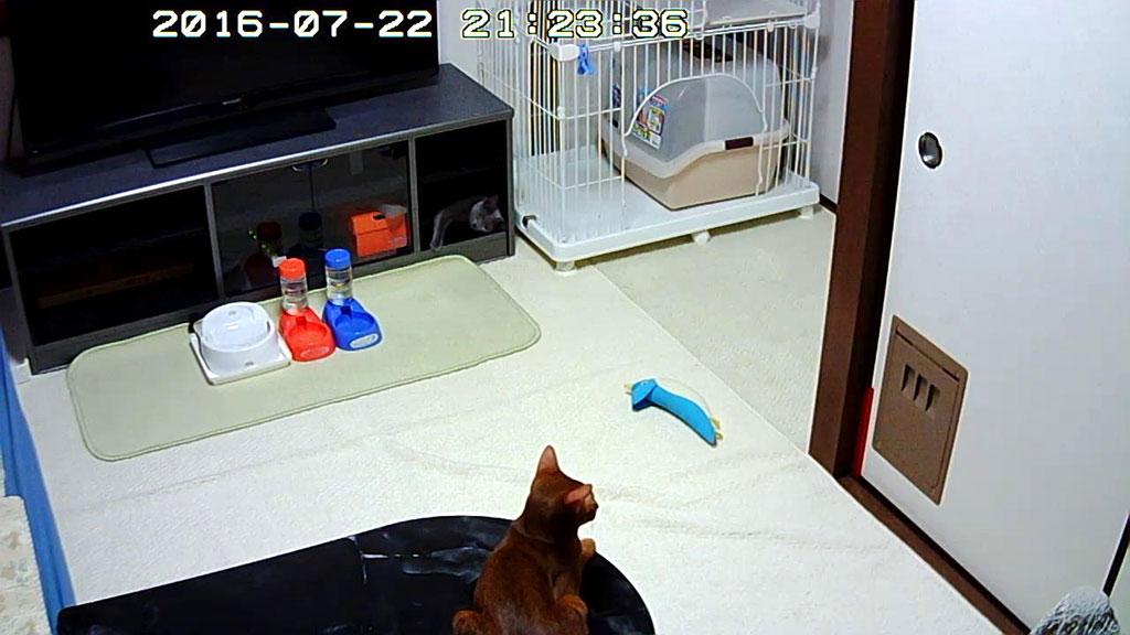 ご飯待ちの我が家の猫たち。