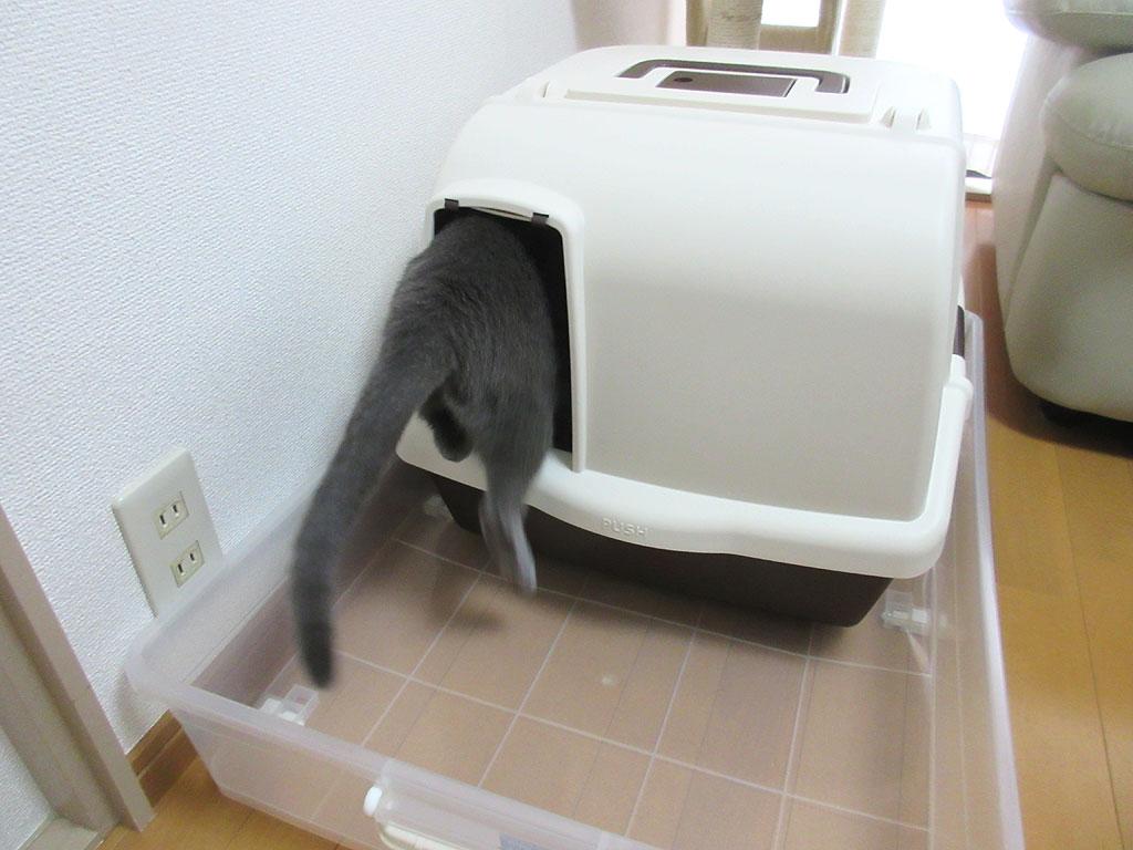 トイレに入って行ったロシ子。