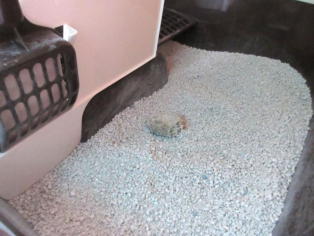 1階の猫トイレ。