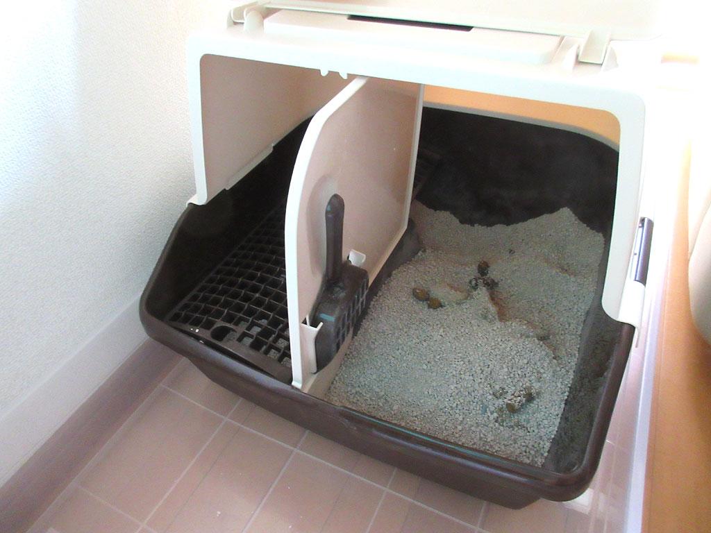 猫たちがトイレをしてくれた。
