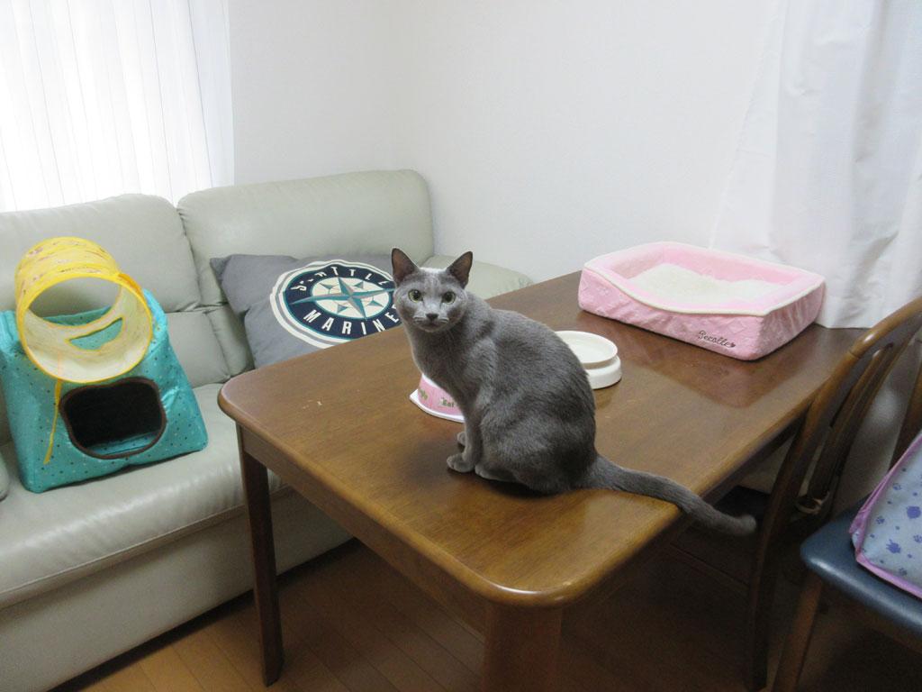 朝ご飯を食べなかったロシ子。