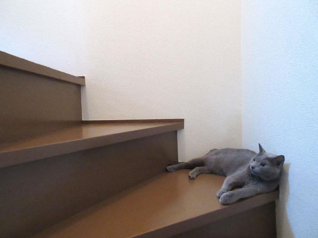 ロシ子の休憩場所。