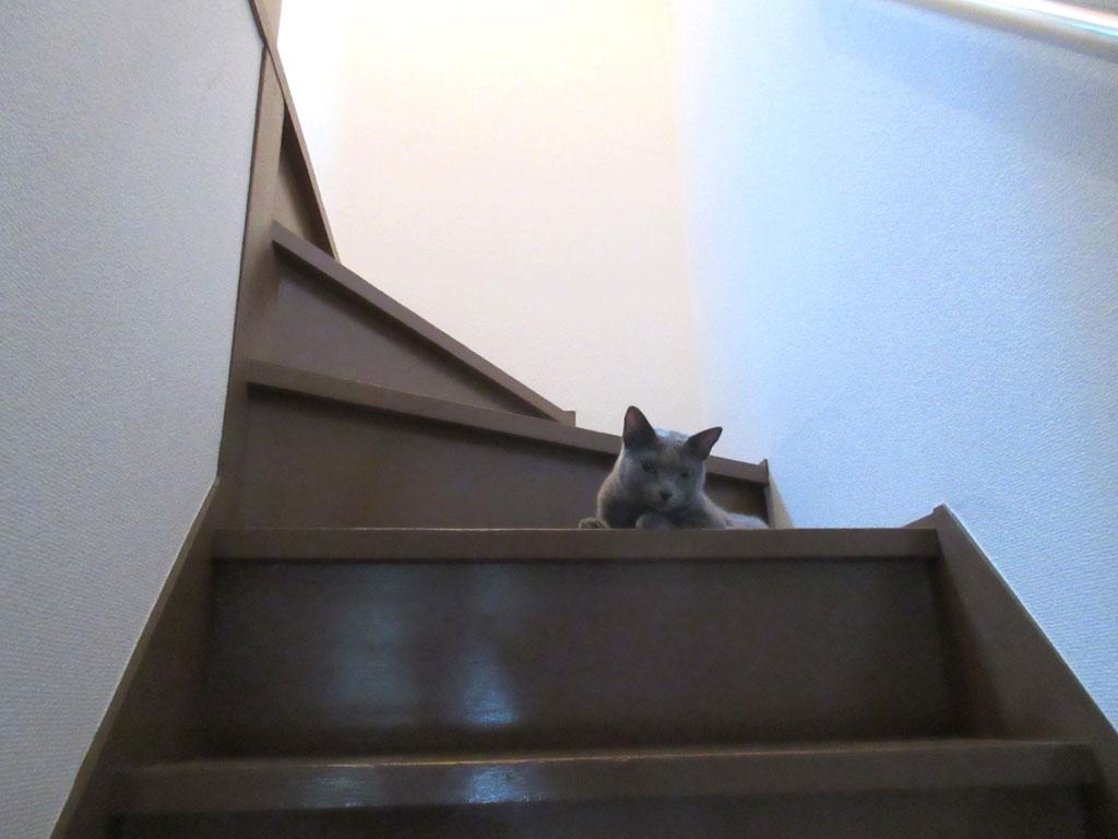 階段で休憩するロシ子。