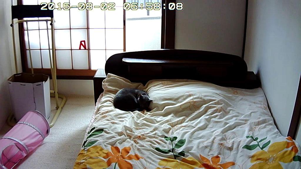 普通の寝方のロシ子ちゃん。