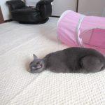 変な寝方のロシ子ちゃん。