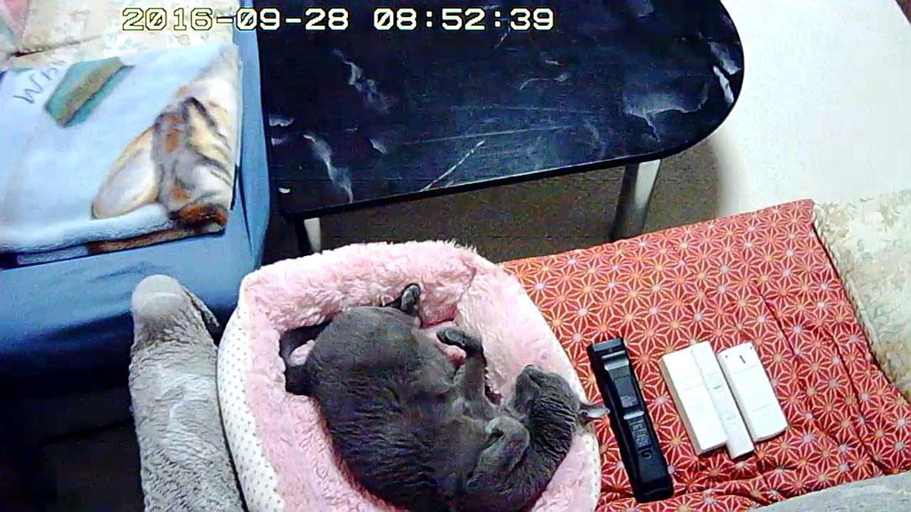 ソファーベットで寝てたロシ子。