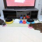 早過ぎる猫たちの朝ご飯。