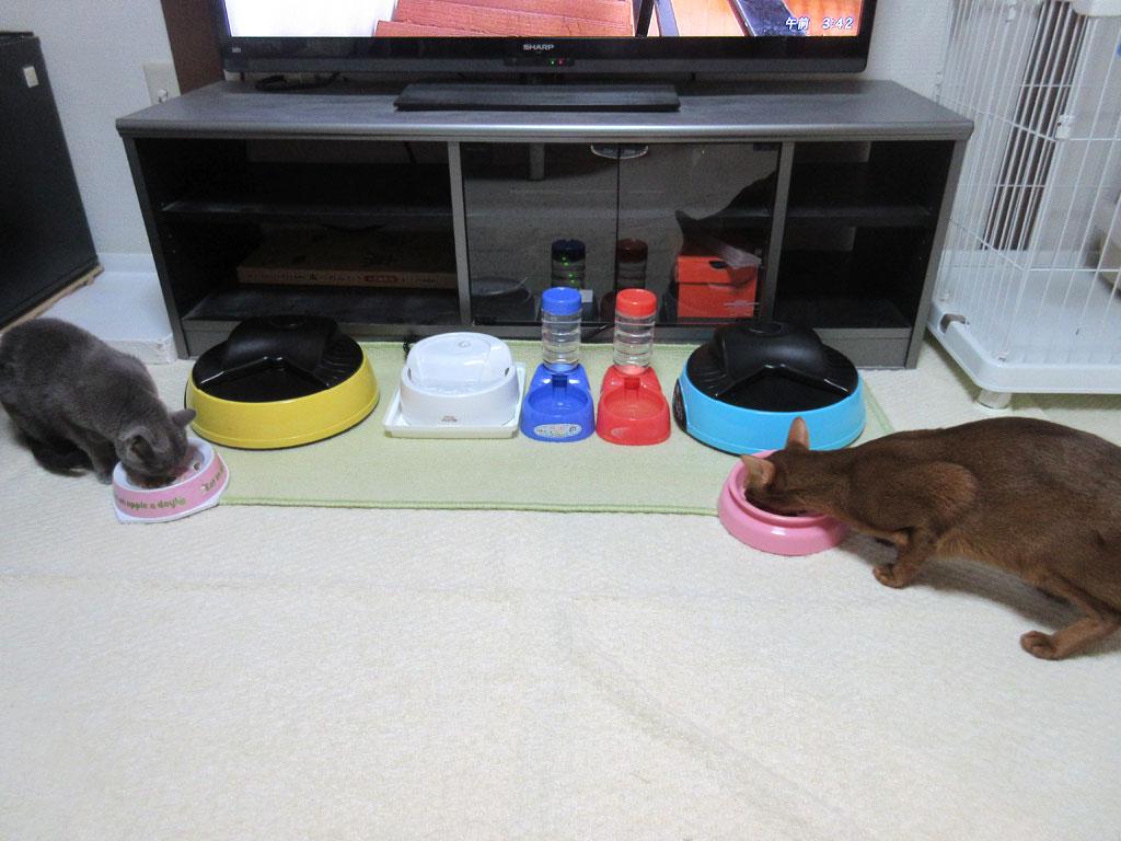 しっかりとご飯を食べる猫たち。