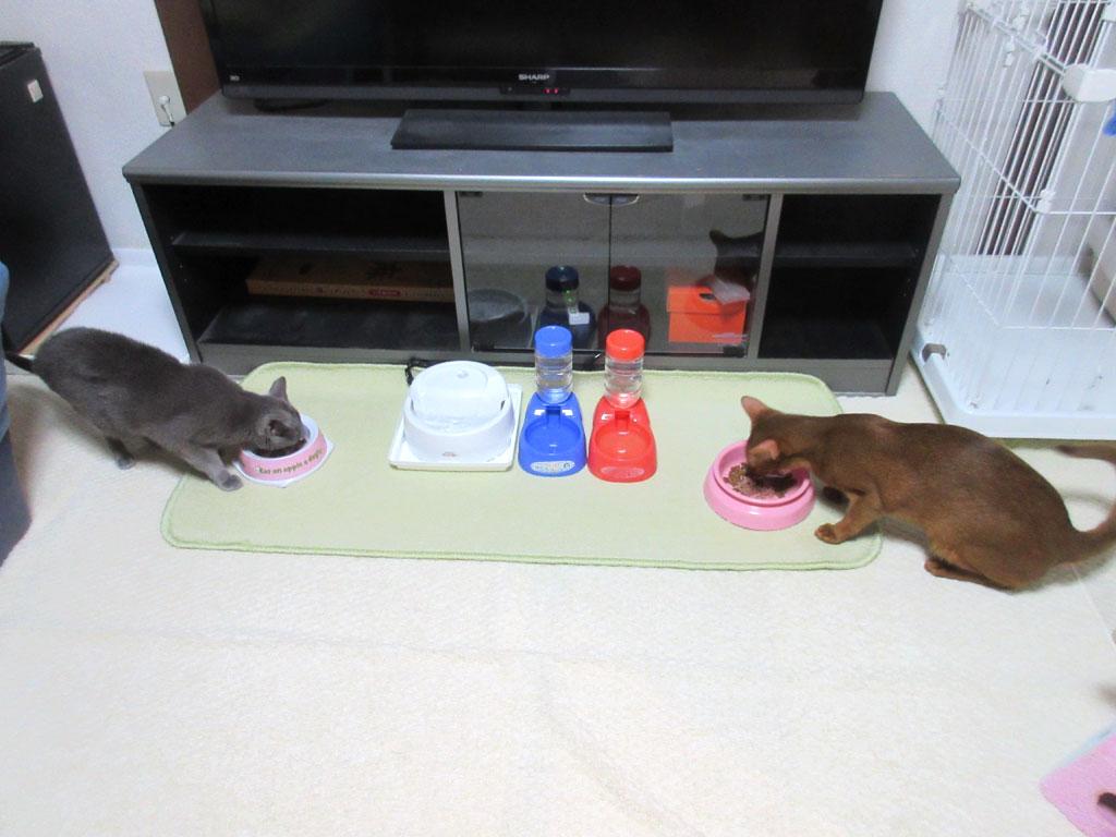 美味しそうに食べてる猫たち。