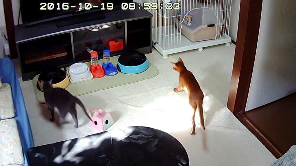 走る猫たち。