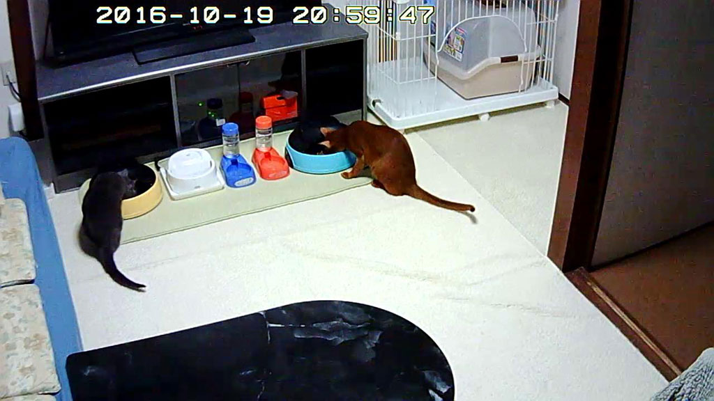 晩ご飯を食べてる我が家の猫たち。