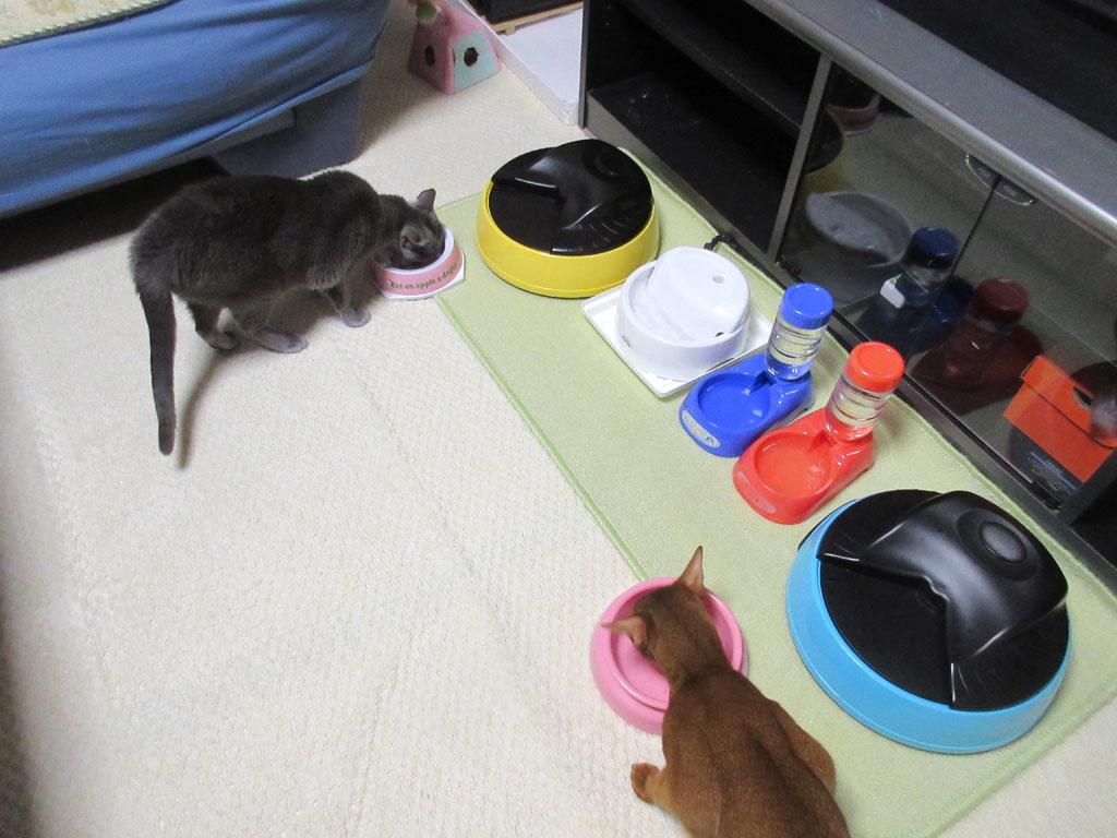 各々のご飯を食べる猫たち。