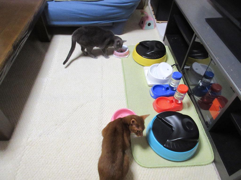 朝3時半の朝ご飯