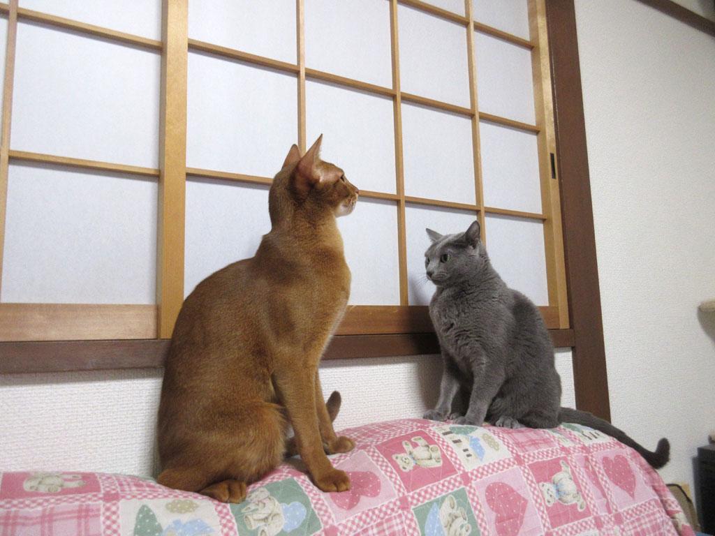 ロシ子とアビのすけ。