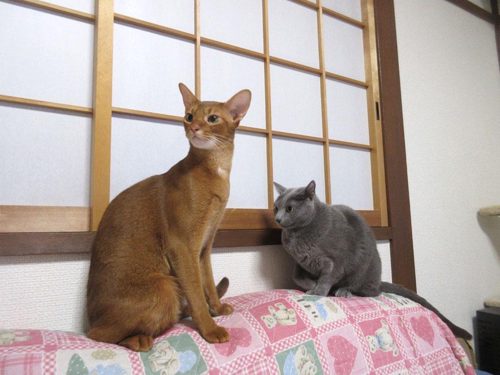 面白い猫たち。