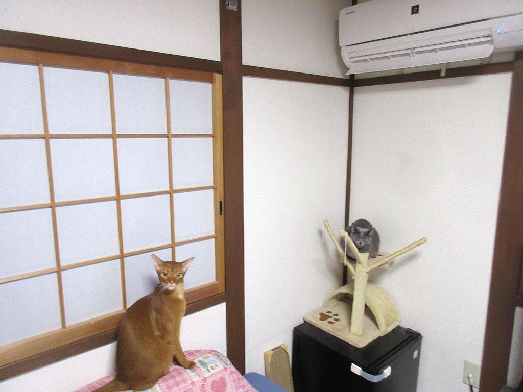 暖房を付け始めました。