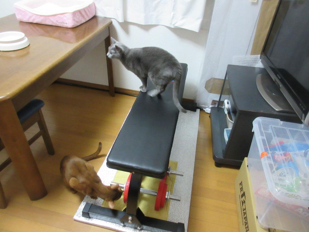 猫たちがボロボロにするだろうな。