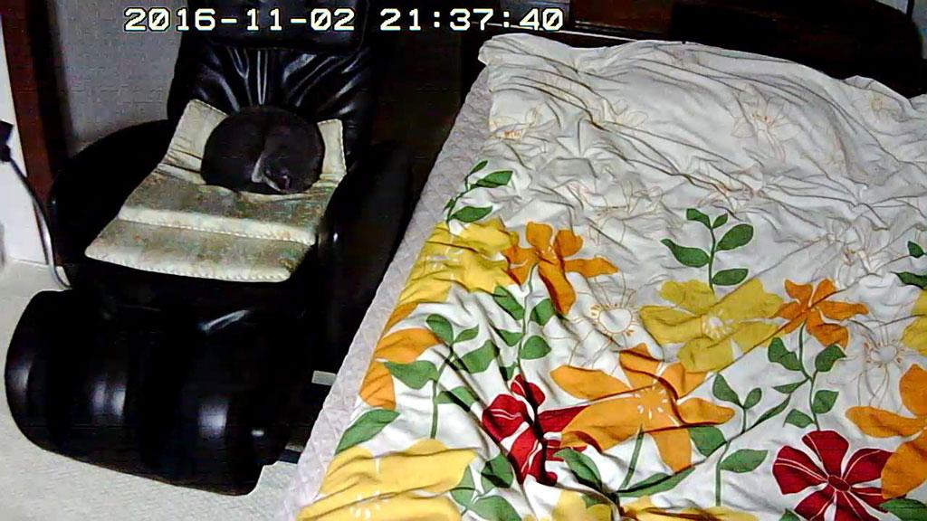 マッサージチェアーで寝ているロシ子。