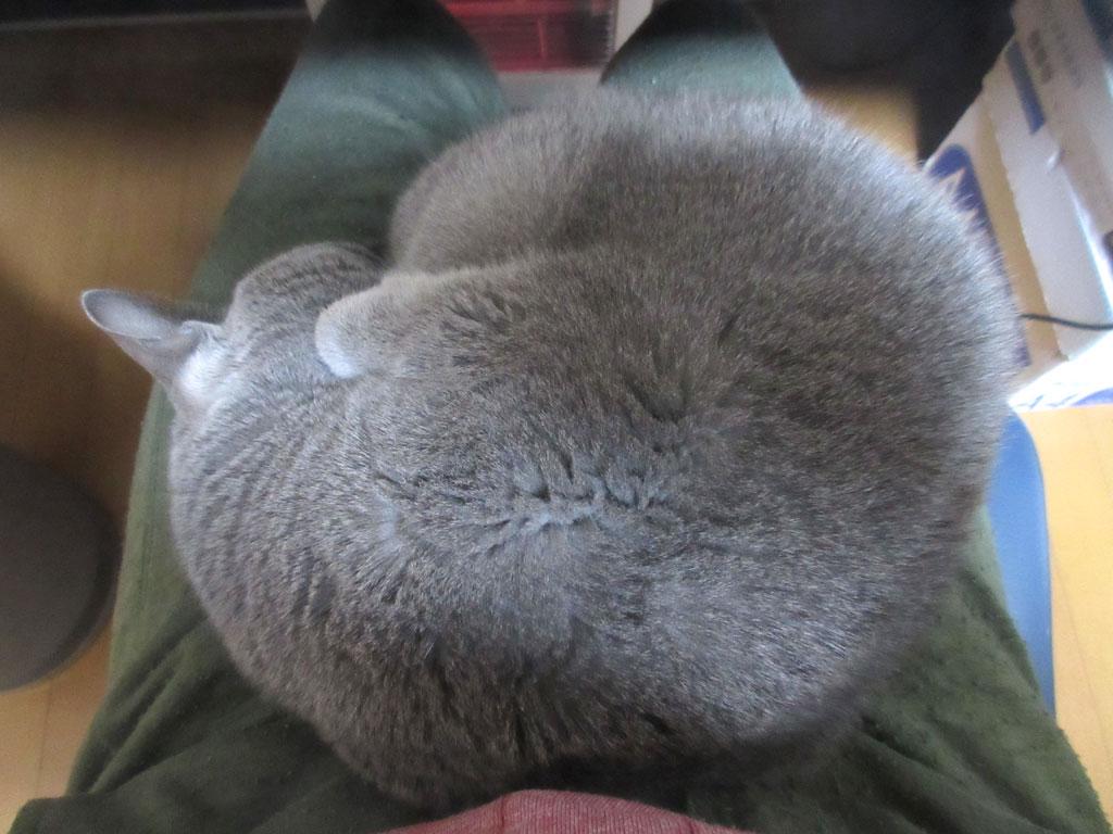 丸くなって寝てしまいました。