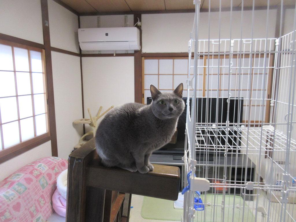 ロシ子も猫。