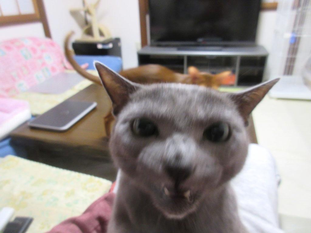 変顔のロシ子の写真。