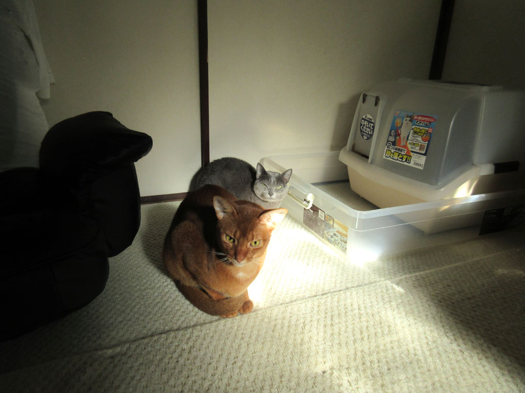 今朝の猫たち。