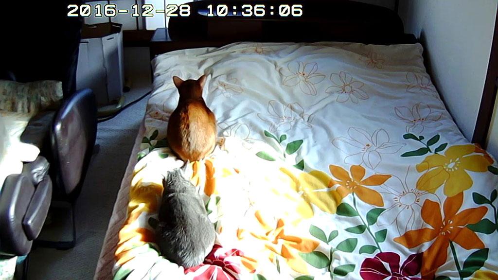 寒そうな我が家の猫たち。