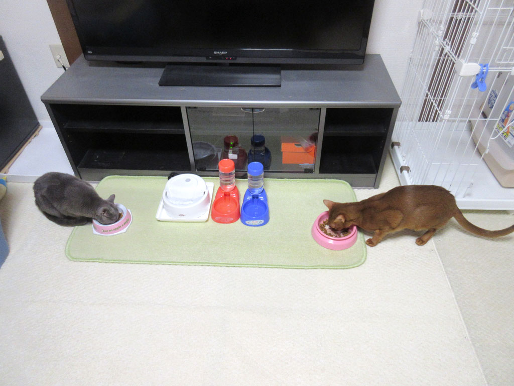 美味しそうにご飯を食べる猫たち。