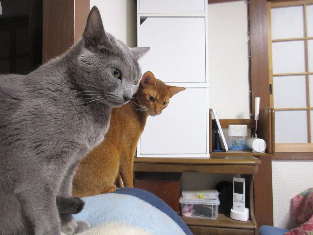 体脂肪率測定後の猫たち。