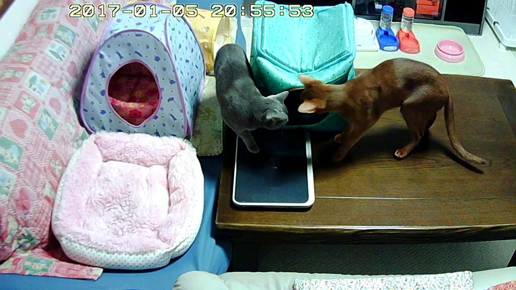 猫たちの寒さ対策。