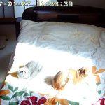 日向ぼっこの猫たち。