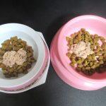 猫たちのお祝いご飯。