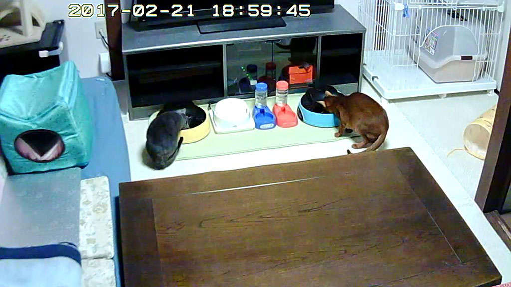 猫たちの晩ご飯の様子。