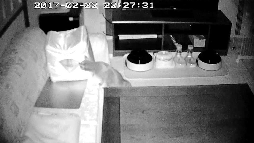 ロシ子がクールボックスの中を。