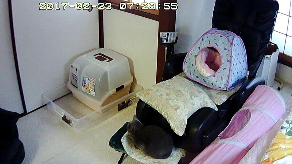 ロシ子が休憩中。