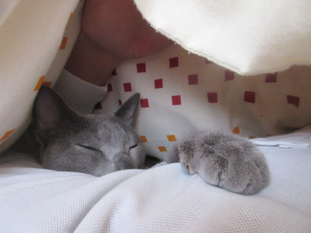 一緒に昼寝のロシ子ちゃん。