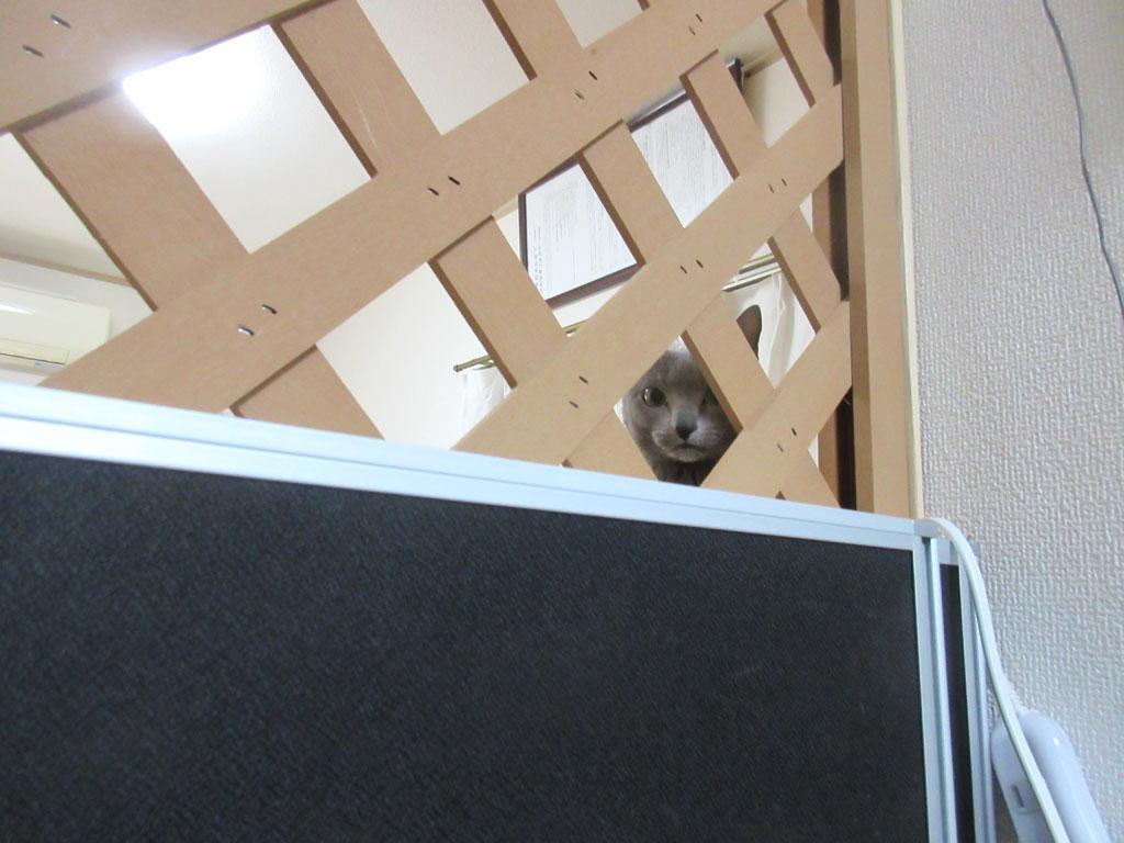 こっちを覗くロシ子ちゃん。