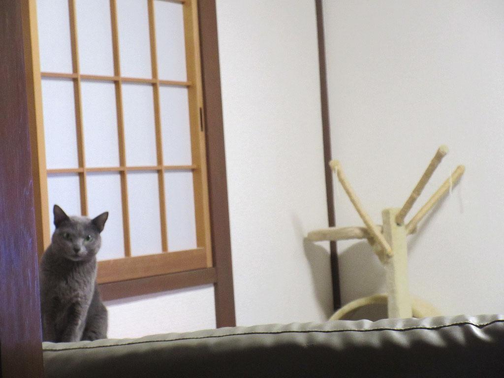 こっちを凝視していたロシ子ちゃん。
