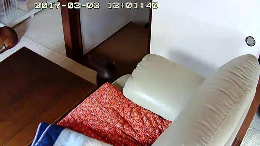 ロシ子が廊下の方にジャンプ。