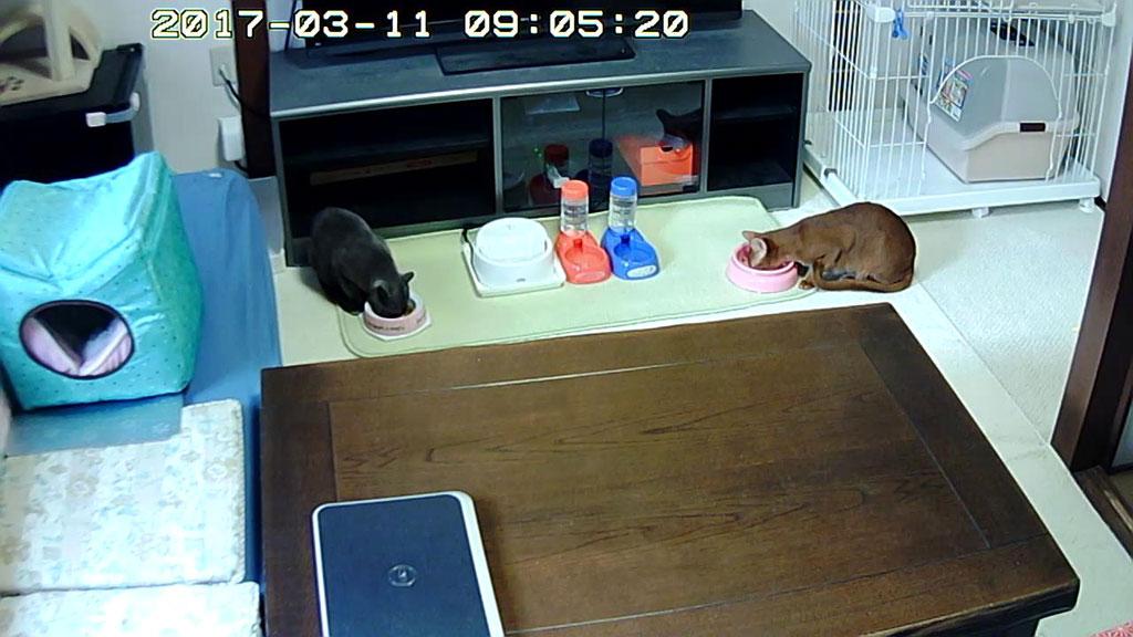 猫たちの朝ご飯の様子。