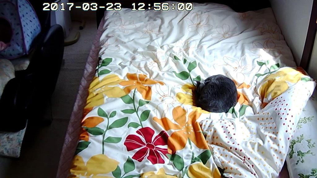 お休み中のロシ子ちゃん。