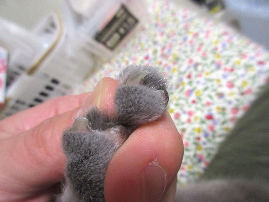 きれいなロシ子の爪。