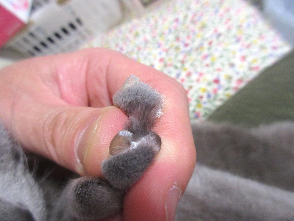 きれいな爪。