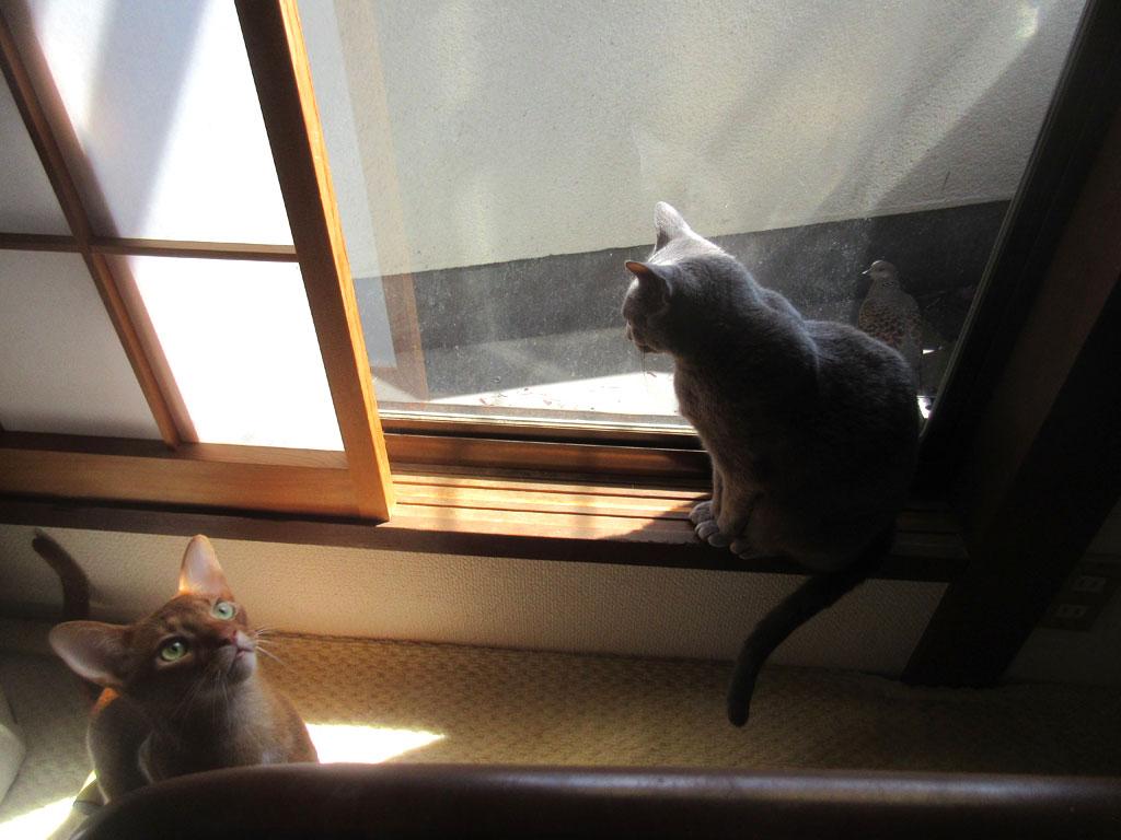 仲良しの猫たち。