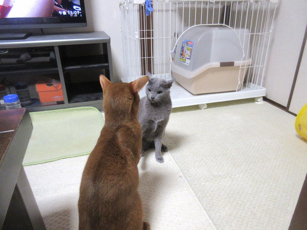 ポジションを変えた猫たち。