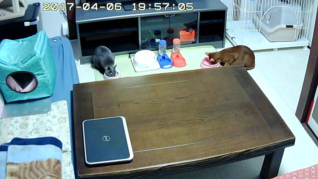 1階で猫たちを監視中。