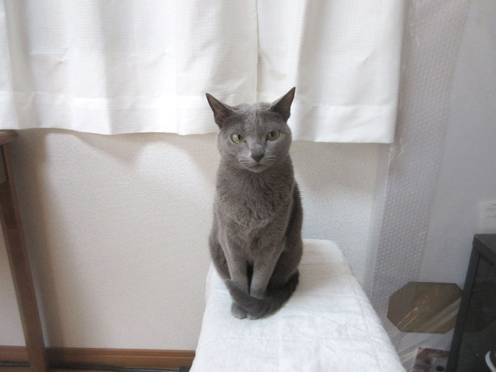 ロシ子が歓迎してくれました。