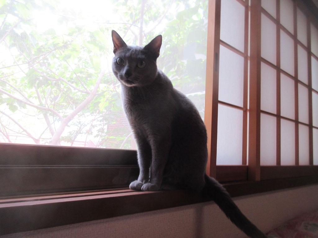 窓際のロシ子ちゃん。