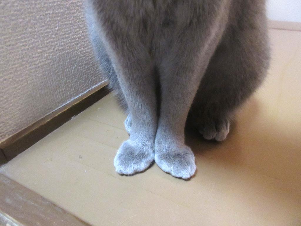 バレリーナの様なロシ子の足。