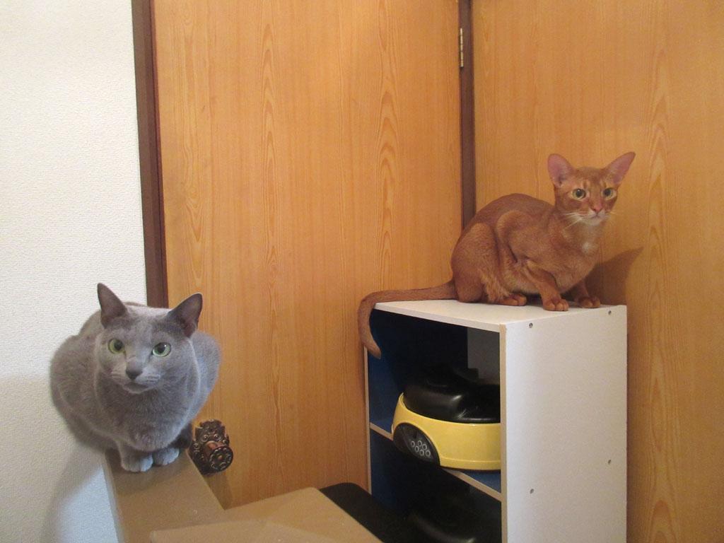 かわいい猫たち。